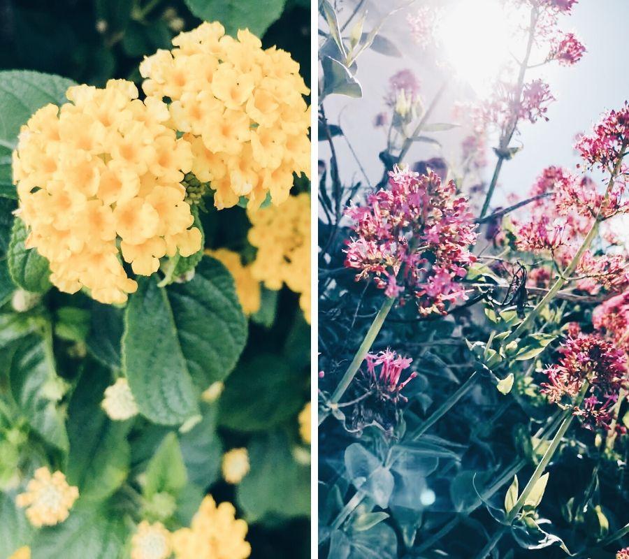 inspiracion flores